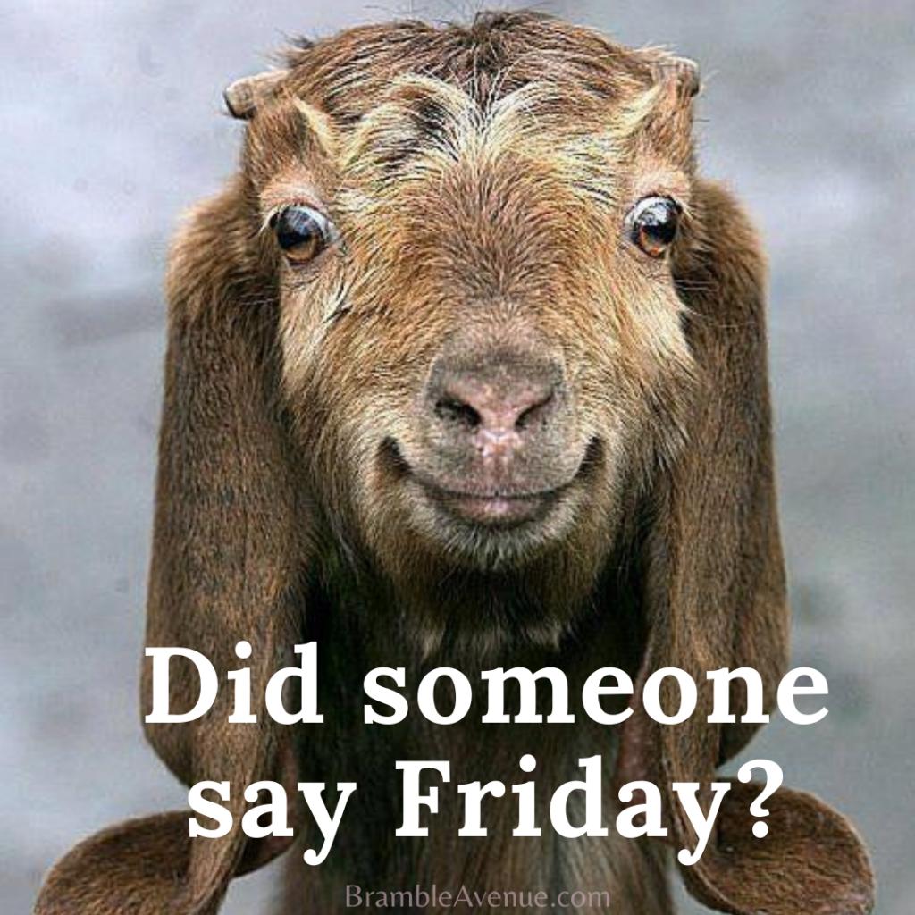 funny friday goat meme