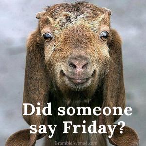cute friday goat meme