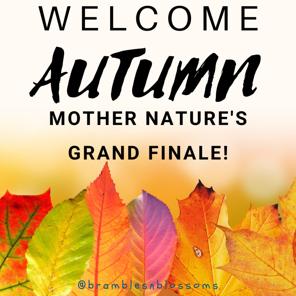 welcome autumn mother nature's grand finale