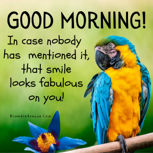 pretty parrot beautiful smile image