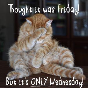 funny only wednesday cat meme