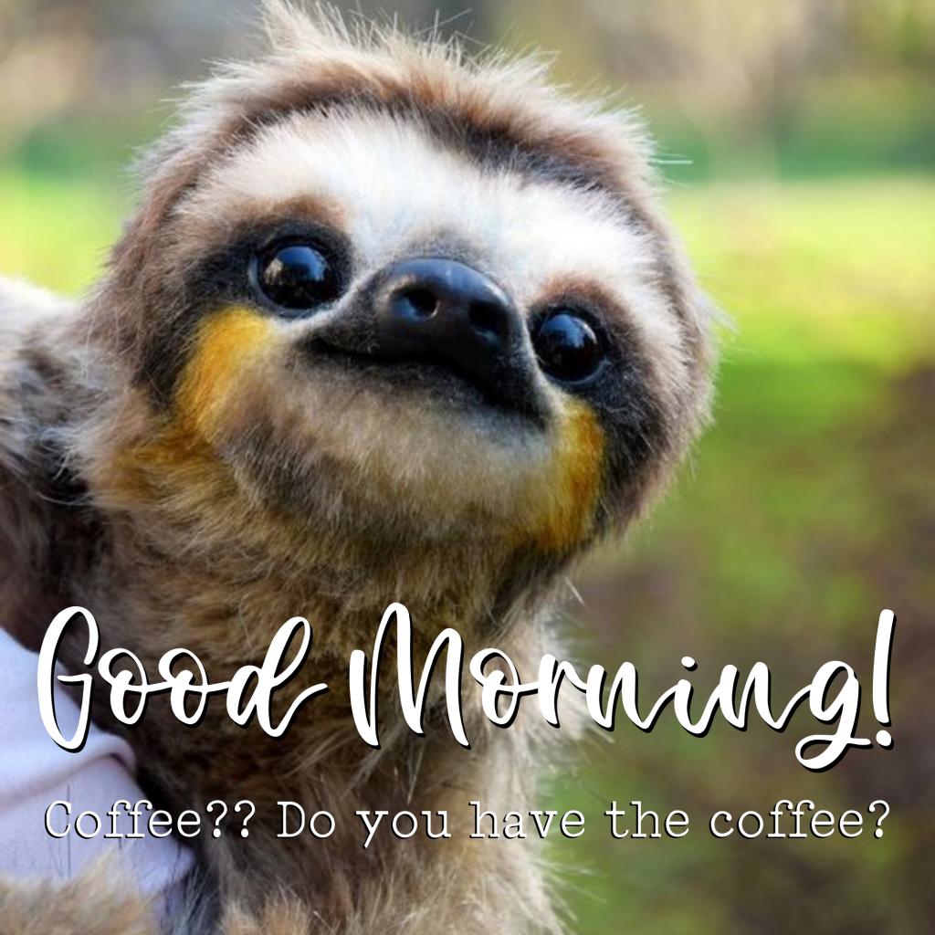 funny coffee sloth meme